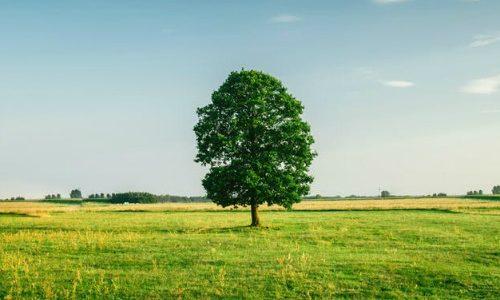 野原の上の木