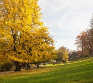 秋のモンスーリ公園