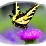 映画 Le Papillon(パピヨンの贈りもの)予告編のフランス語 その1