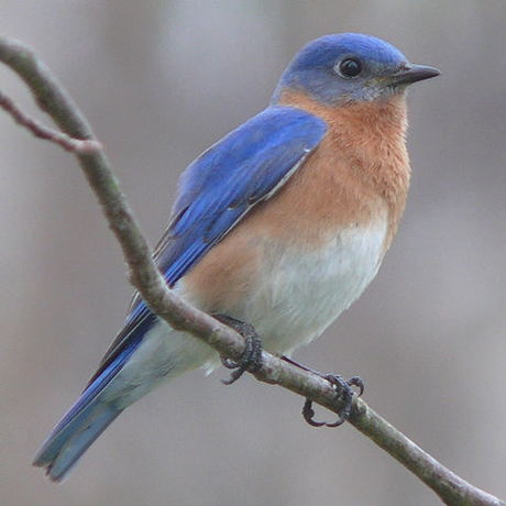 青い鳥・タイトルのフランス語第8回