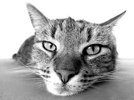 かわいいフランス語、教えます~その9 猫の名前