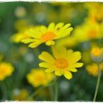 悲しみの庭~ジョルジュ・ムスタキ、歌と訳詞