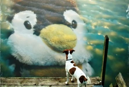 penの顔を見る犬