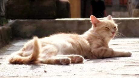 ベルヴェデールの猫