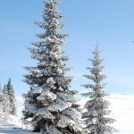 クリスマスの単語 その2「クリスマスツリー」