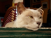 退屈している猫