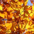 秋がやってきたから(ア・ラ・ファヴール・ドゥ・ロートン)~テテ:歌と訳詞