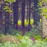 フランス語のことわざ57~木はしばしば森を隠す(木を見て森を見ず)