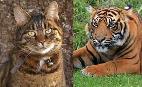 トラとネコ