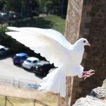 フランス語のことわざ64~カエルのよだれは白鳩には届かない