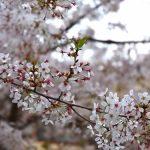 フランス人と日本人の「花の楽しみ方」の違いとは?