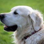 犬の肉を食べる中国の犬肉祭りに世界中から非難の声