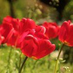 春(季節の単語)~フランス語の暦(1)