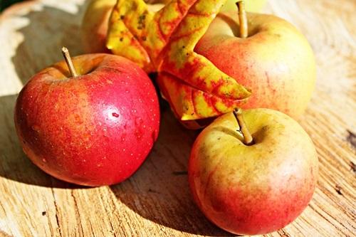 りんごのおいしさがギュッと凝縮~タルトタタンの作り方:フランスのお菓子(9)