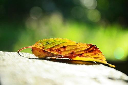 インディラの Feuille d'Automne (秋の葉っぱ) :歌と訳詞