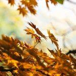 10月の終わり、11月の初め・イザベル・ブレー:歌と訳詞