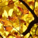 フランシス・カブレル Octobre (10月):歌と訳詞。美しすぎる秋の歌