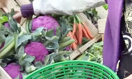 紫色のカリフラワー